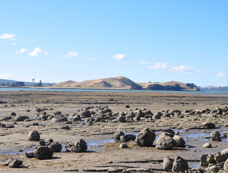 Image #Wide shoreplatform eroded out of Waitemata Sandstones in last 7000 years, W Musick Pt.
