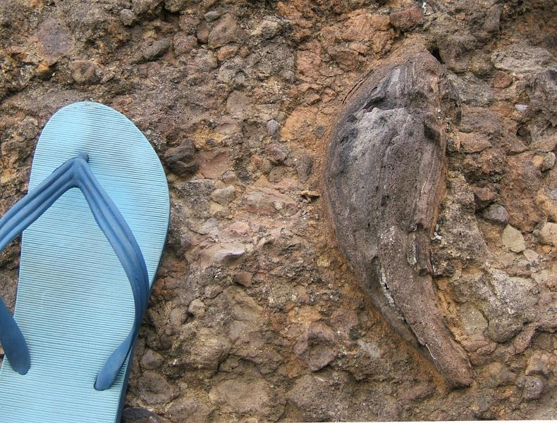 Image #Spindle-shaped volcanic bomb, south side of Lion Rock at high tide level.